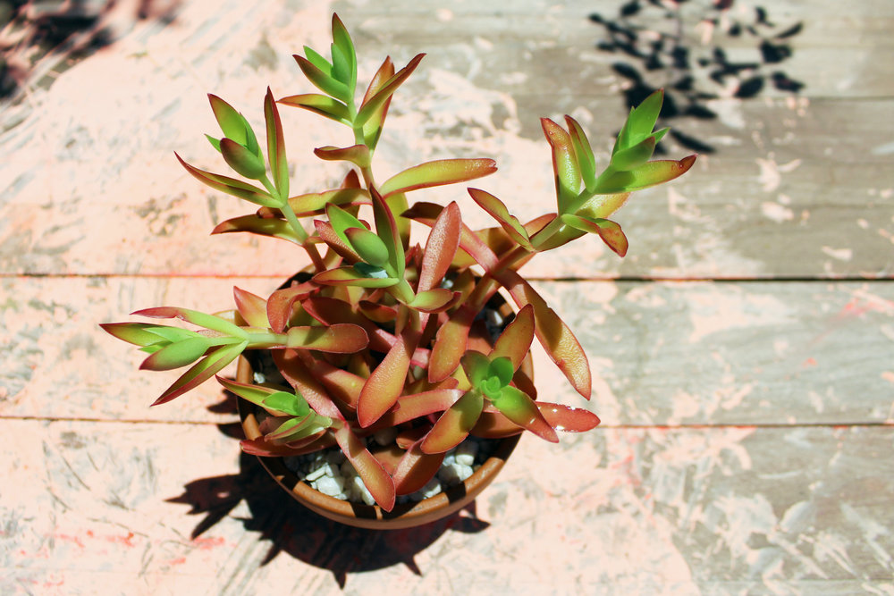 Plant2_Outside.jpg