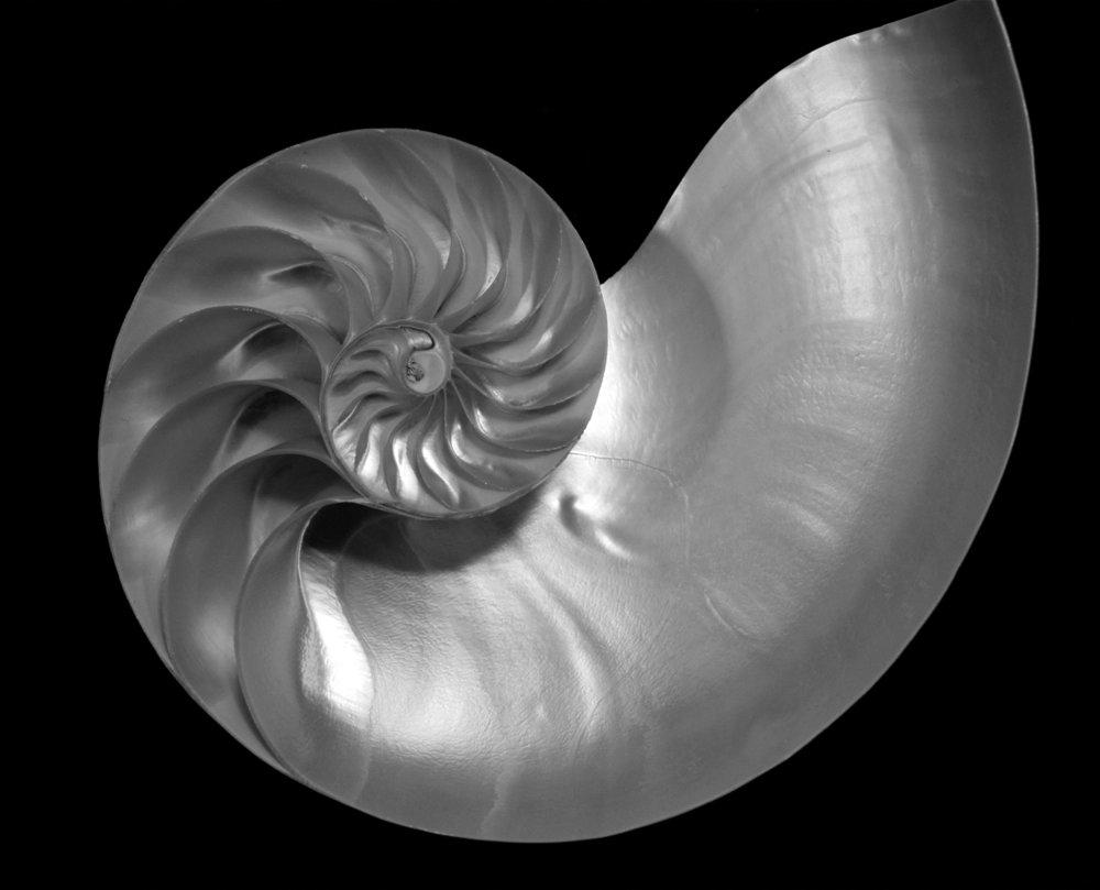 shellbwsociety.jpg