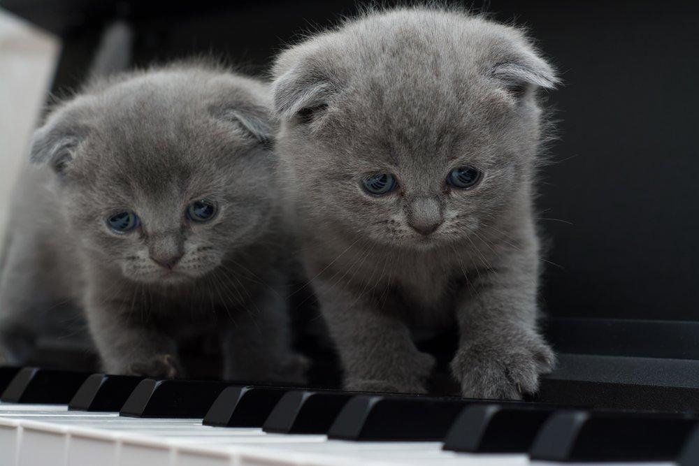 cat-1845787.jpg