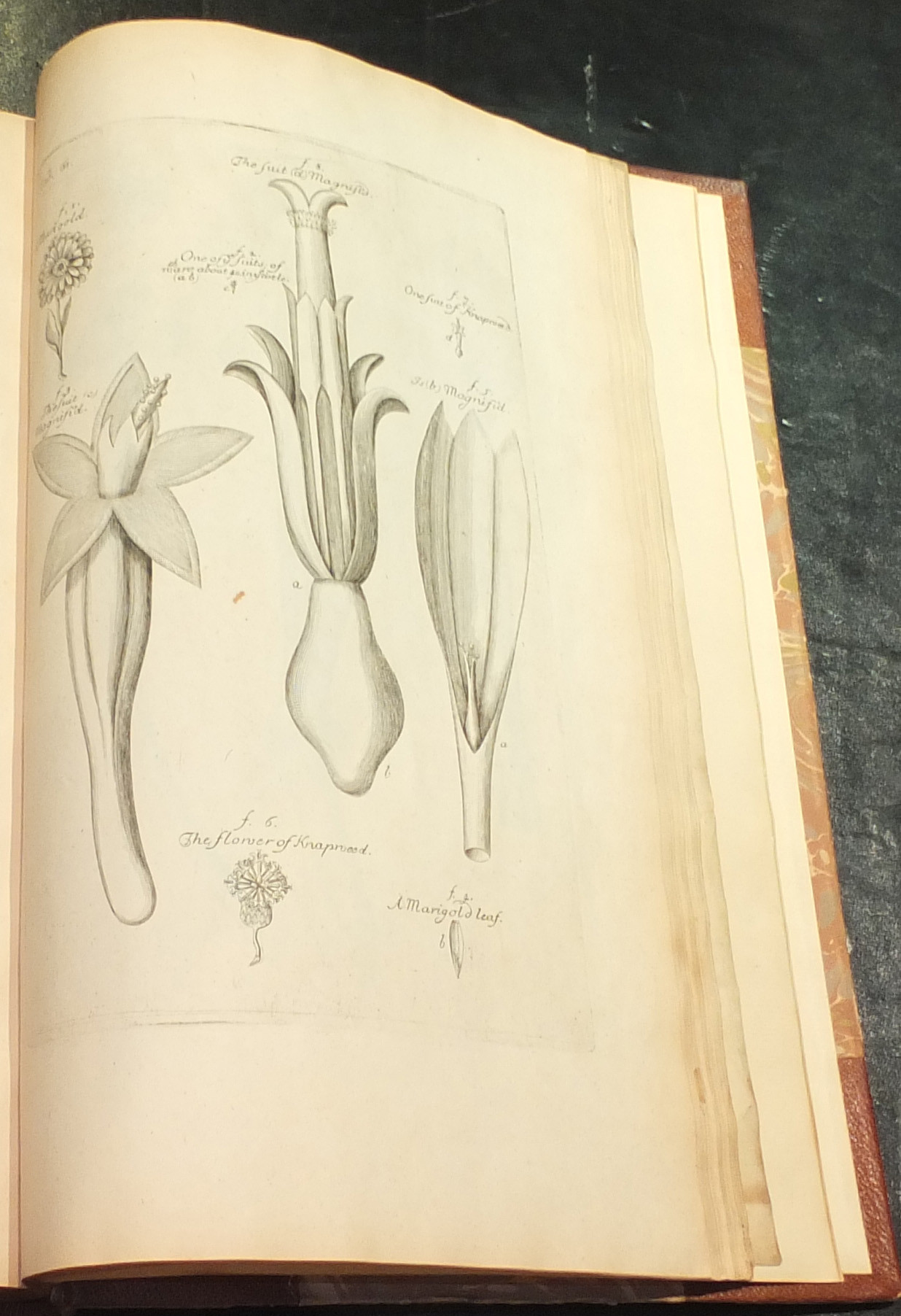 Grew Nehemiah 1641 1712 The Anatomy Of Plants With An Idea Of A