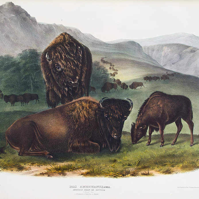 Plates from the octavo edition of Audubon's The Quadrupeds of North America