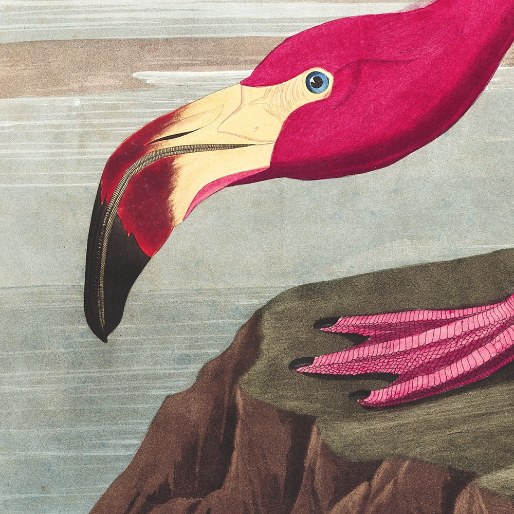 Plates from John James Audubon's Birds of America
