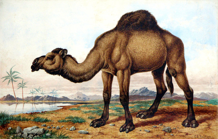 General Animalia