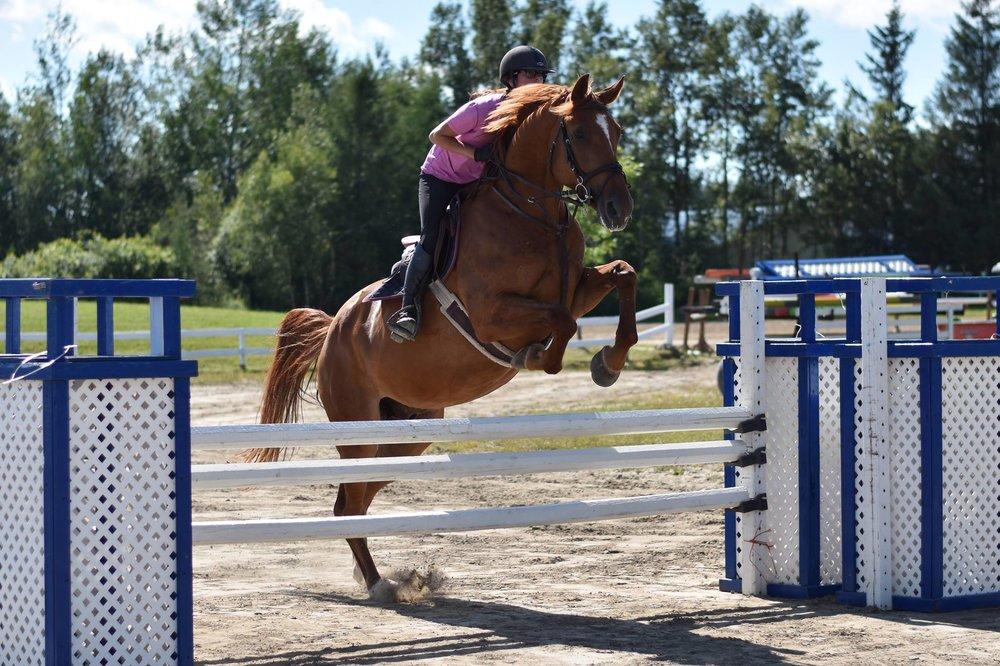 Vous voulez entraîner votre poulain ou votre cheval d'expérience, c'est possible ici !