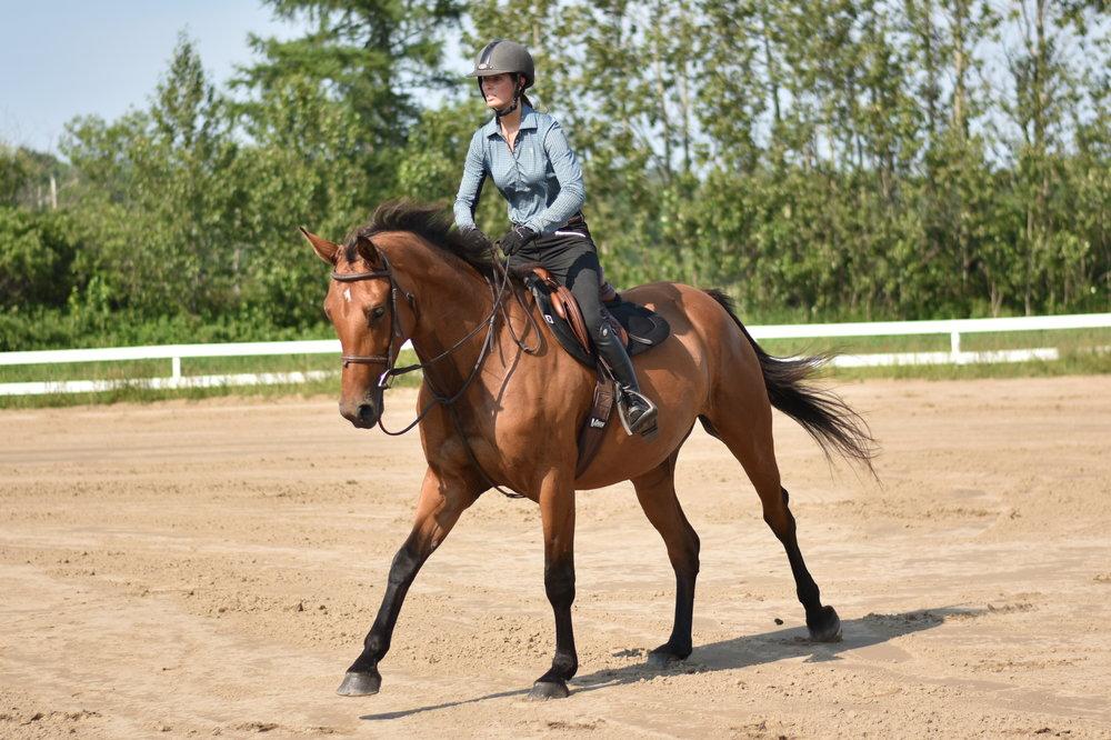 Vous cherchez une place pour entraîner votre poulain ou cheval d'expérience?