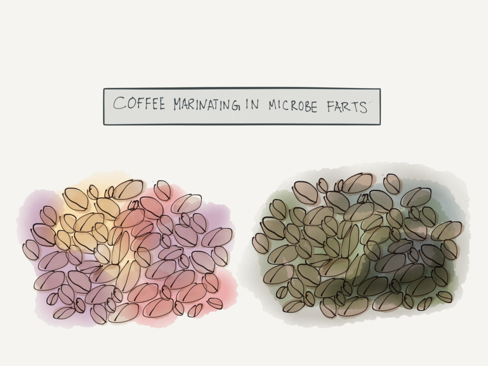 Flavor metabolites are basically yeast and bacteria farts. Which would you rather your coffee marinate in?