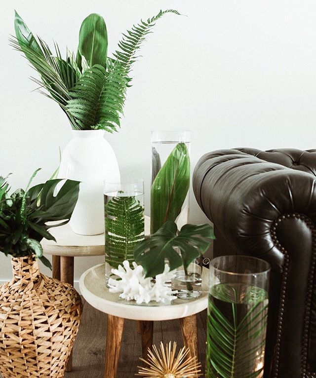 loungin' tropical style ⁓ #homestyling #homesweethome #onepalmstyling #palms #fordays #plantdecor #tropicaladdicted