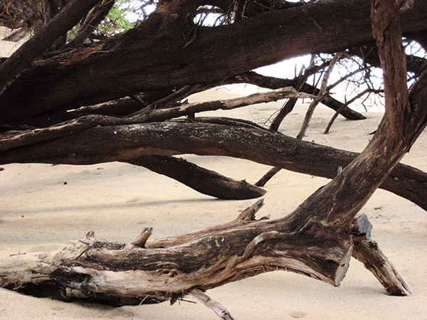 Maui Mangroves #2