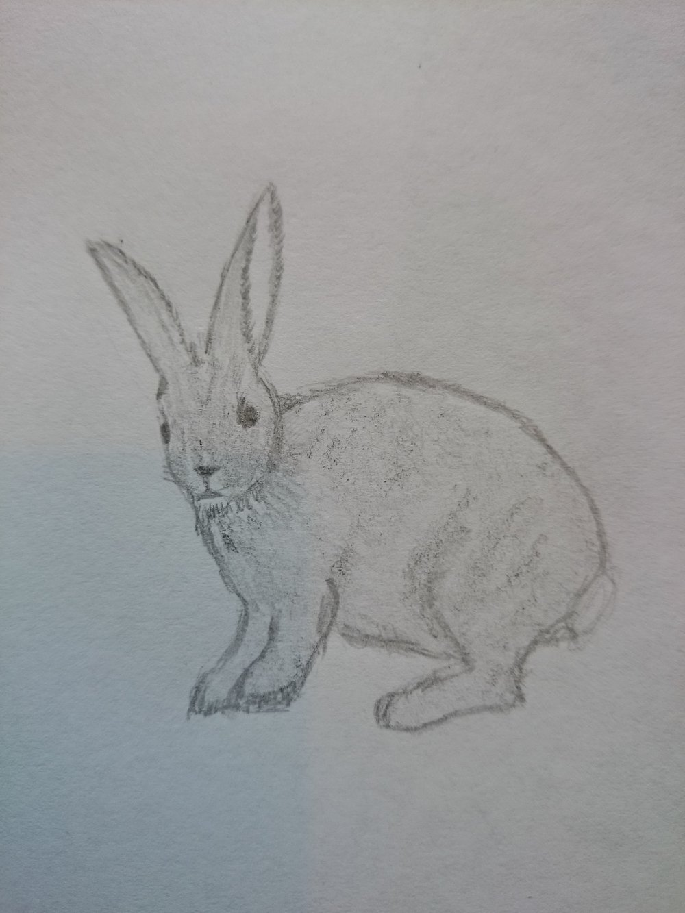 Osley the rabbit, head turned to look directly at the viewer. Que is alert and quer long ears are standing straight up. Quer hind legs are ready to leap if que wants to, and que is very round and delightfully furry. By LM.
