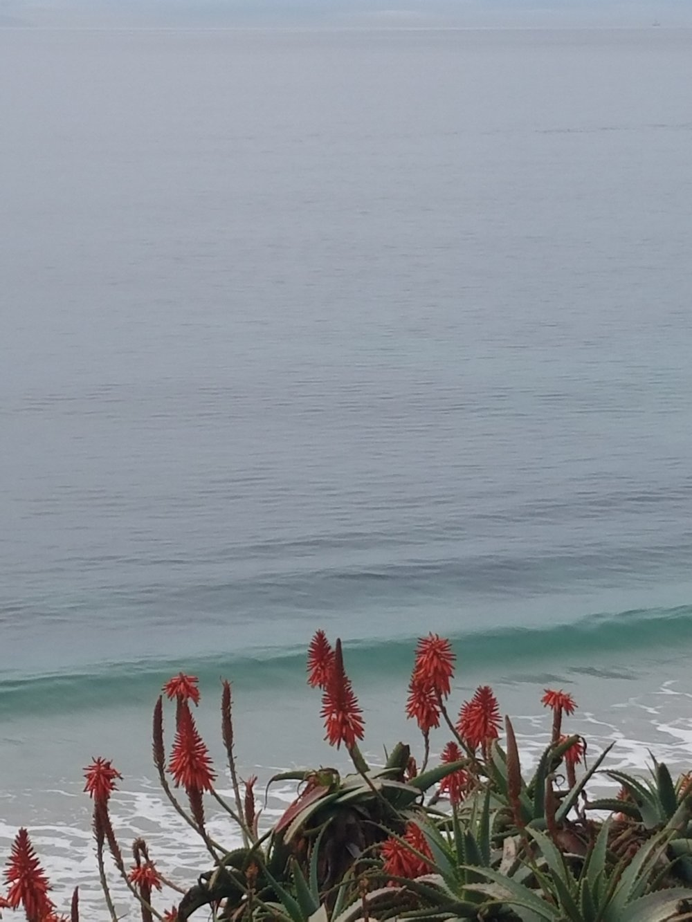 A photograph (taken by the author) of the Pacific Ocean, featuring very small, gentle waves behind spiney red and green plant life.