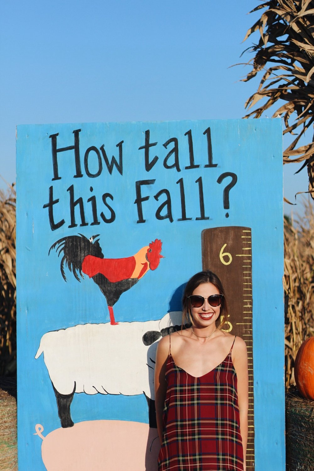 The Ozark Corn Maze