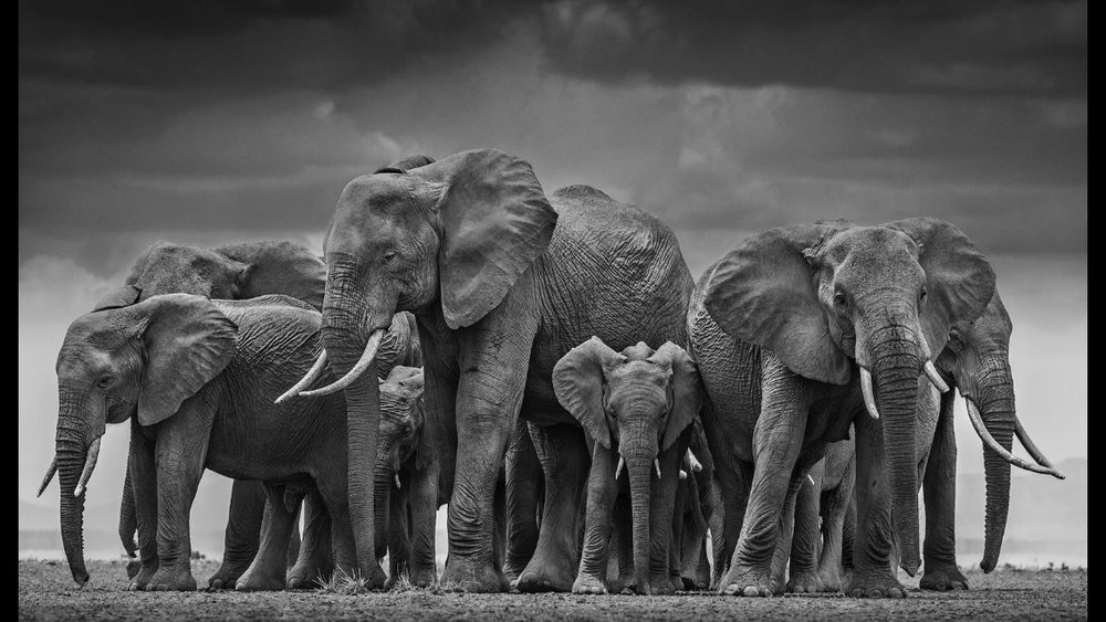 photo cred:  David Yarrow Photography