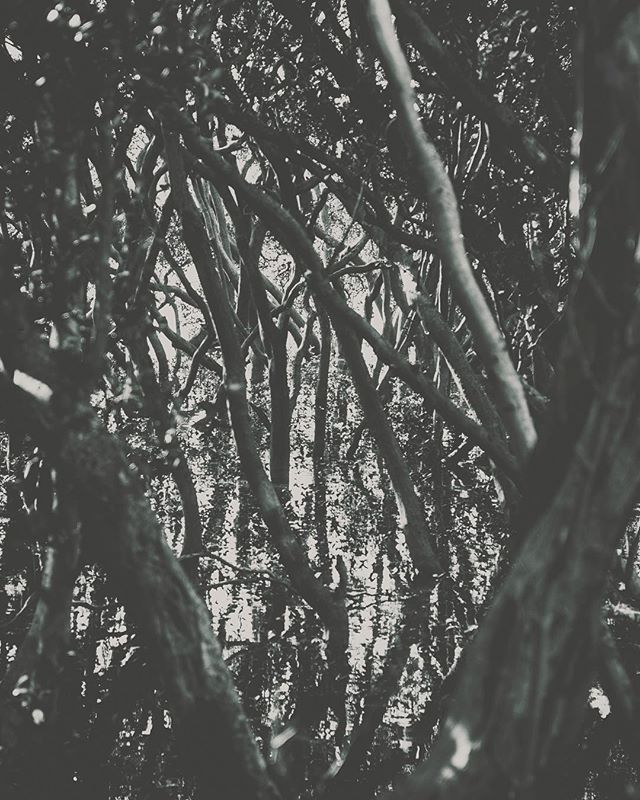 Searching for depth in the entanglements of nature; Or searching for my nature in the depth of my entanglements. . . . . . #blackandwhite⚫️⚪️ #treesofinstagram #mangrove #lightandshadow #ig_exquisite #existentialism
