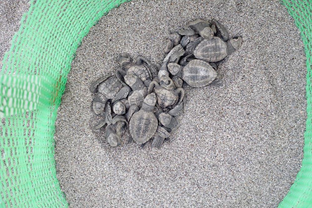 turtle nest ll.jpg