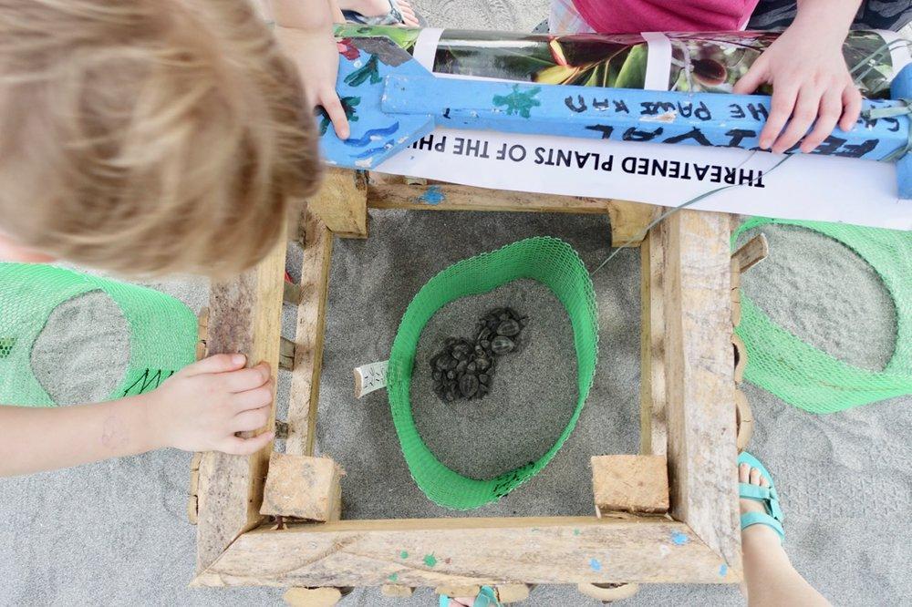 turtle nest l.jpg