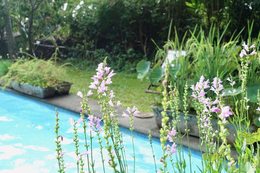 pool ll.jpg
