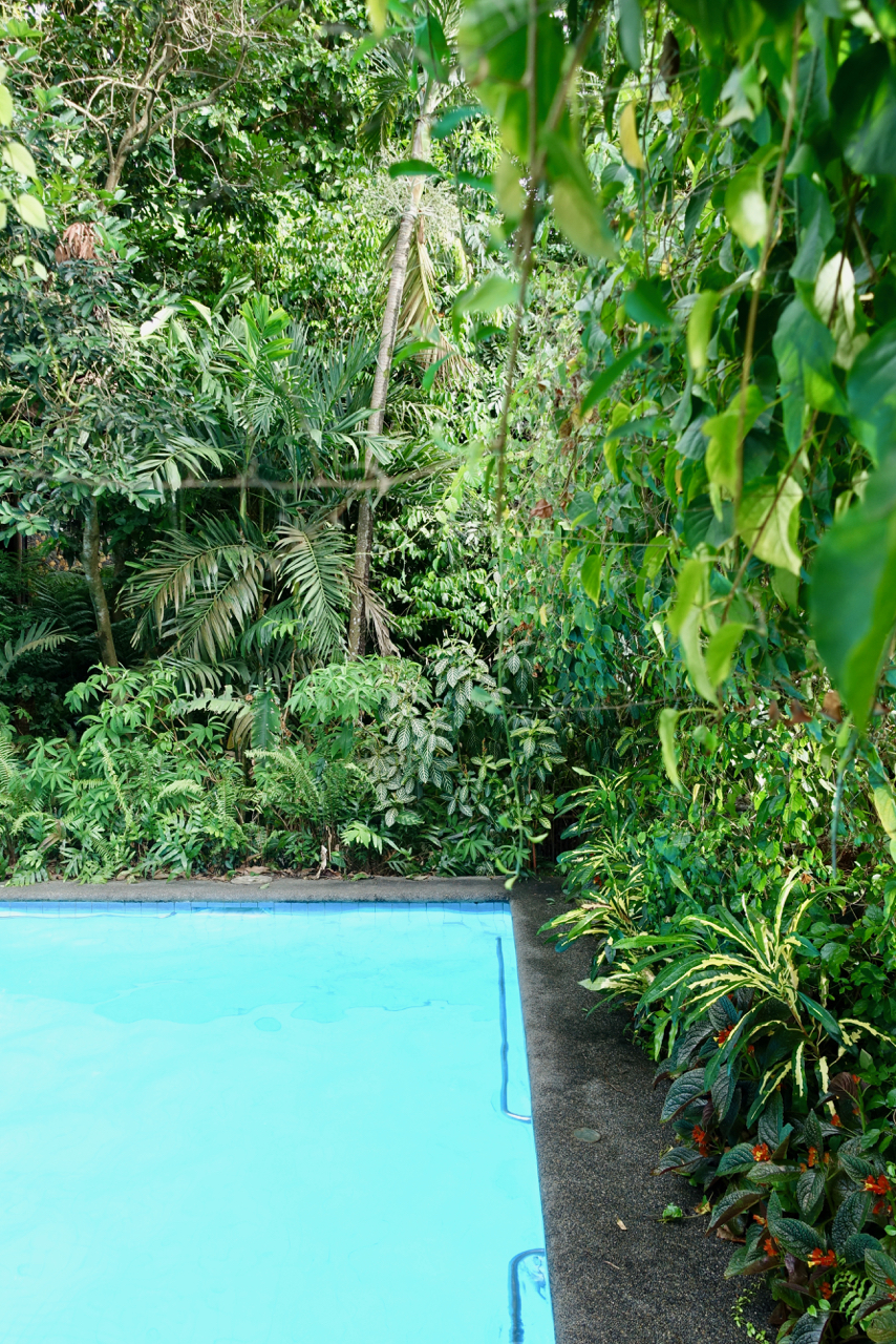 - mountains+jungle+pool