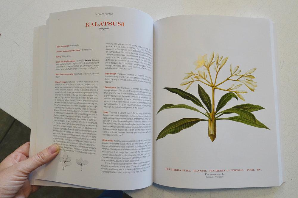 flora + fauna.jpg