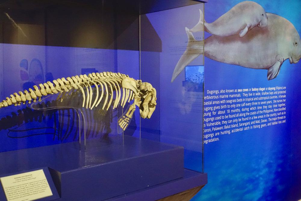 natural history l.jpg