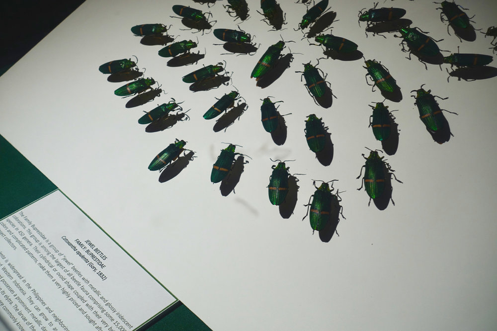 natural history lv.jpg
