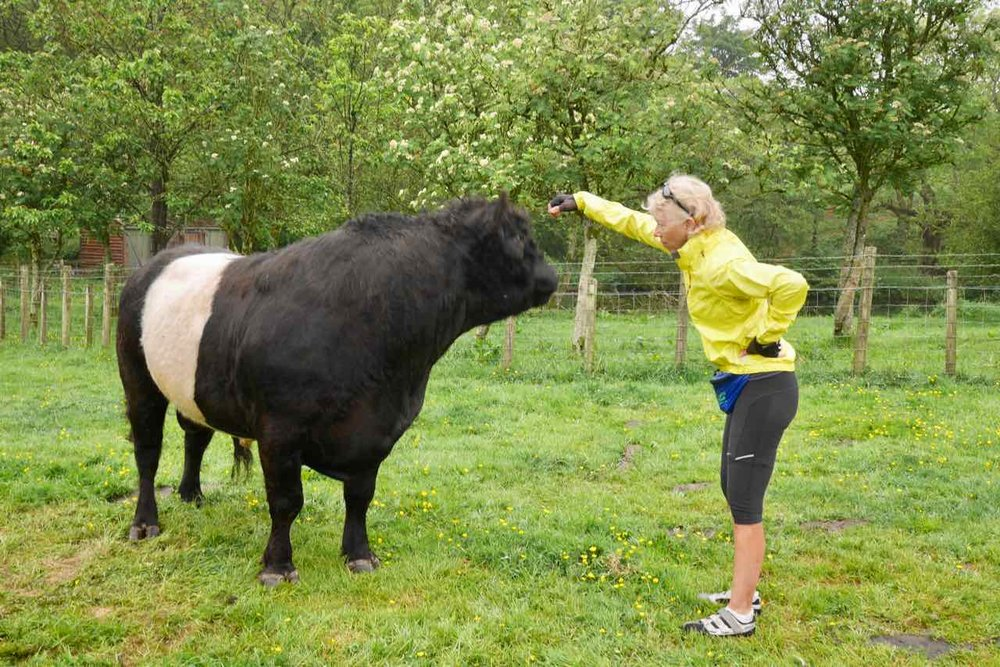 Marilyn + a lovely Beltie Bull