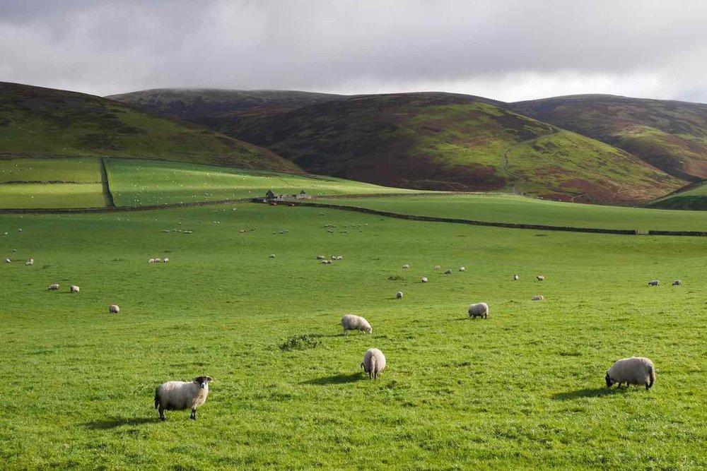 Galloway Highlands