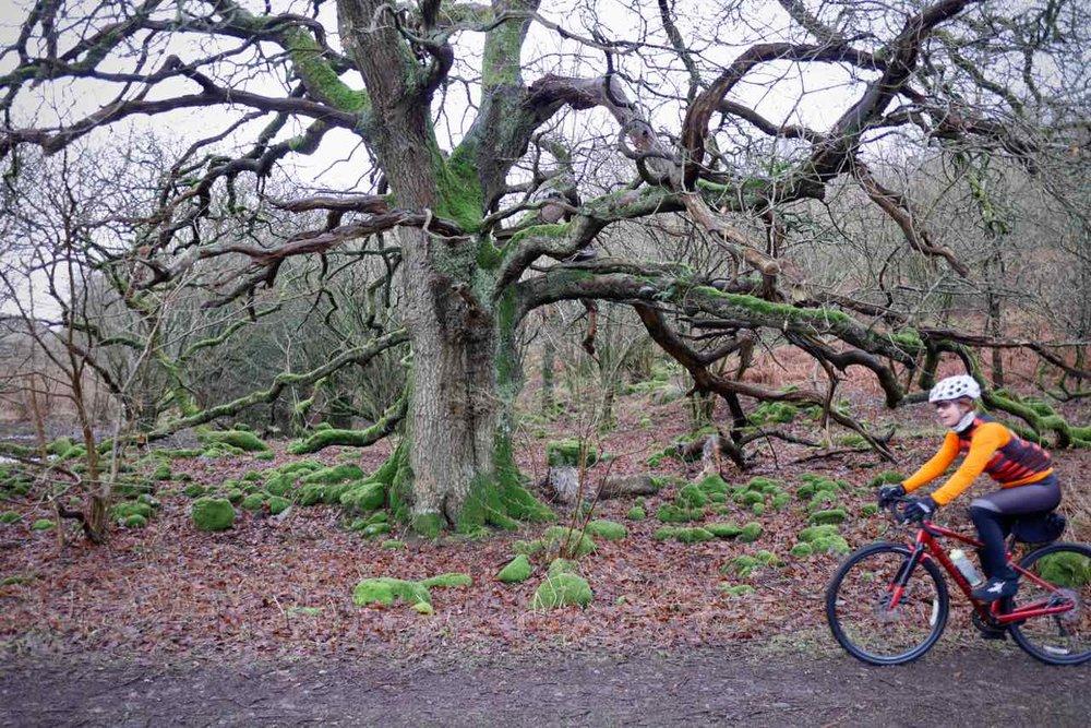 Old Trees.jpg