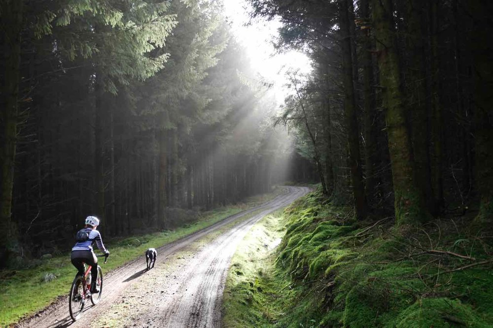 Dalbeattie Forest.jpg