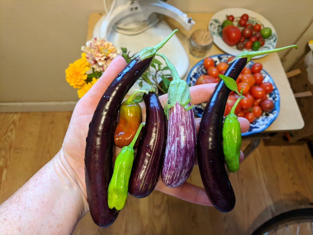 This week's precious end-of-season eggplant and pepper harvest from the community garden plot