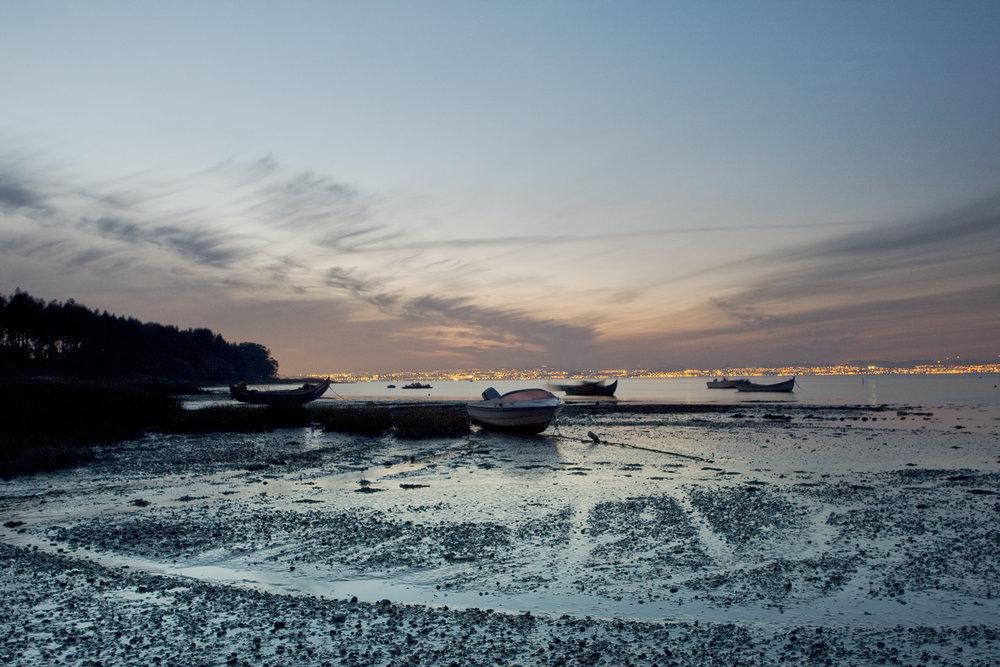 O Sítio das Hortas é um dos locais mais acessíveis do estuario do Tejo alcochete001.jpg