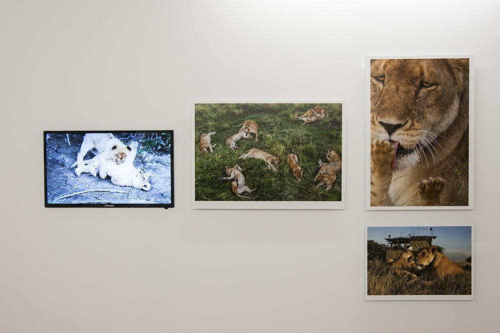 Um dos momentos mais altos do certame é a exposição Uma Vida Selvagem / A Wild Life, de Michael Nichols, uma referência da fotografia animal e natureza no seu estado mais selvagem. A exposição que agora se apresenta ao público é o resultado da sua última parceria com a National Geographic.