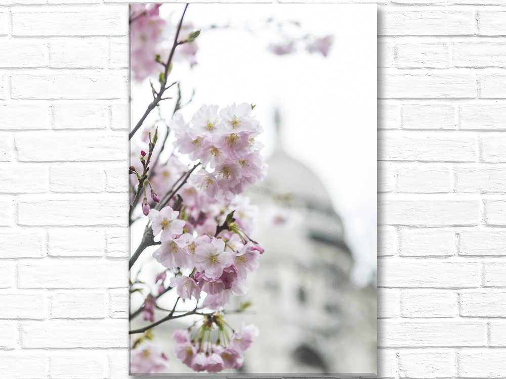 Paris France Home Decor Canvas Wall Art, Pink Blossoms Sacre Coeur