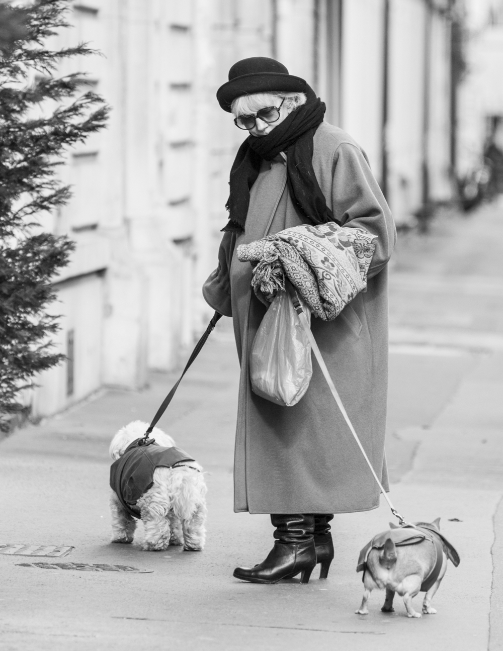 Lady with dogs.jpg