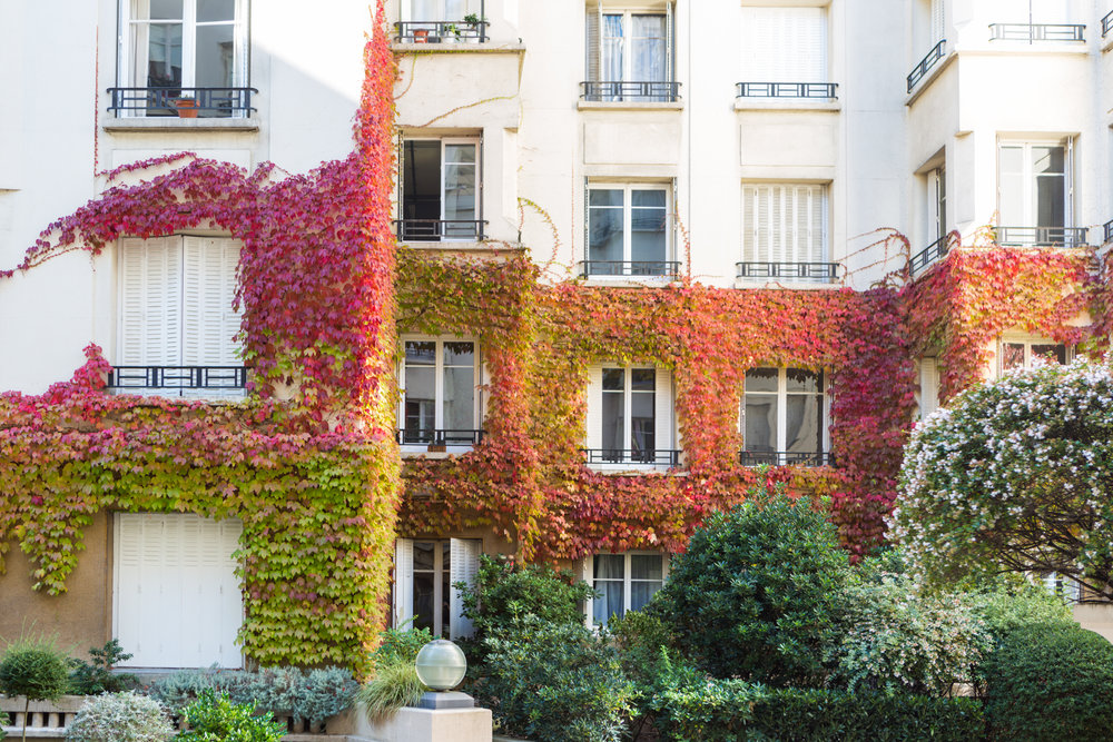 There are many beautiful spots for autumn color to be found that are off the beaten path, such as this apartment building courtyard.