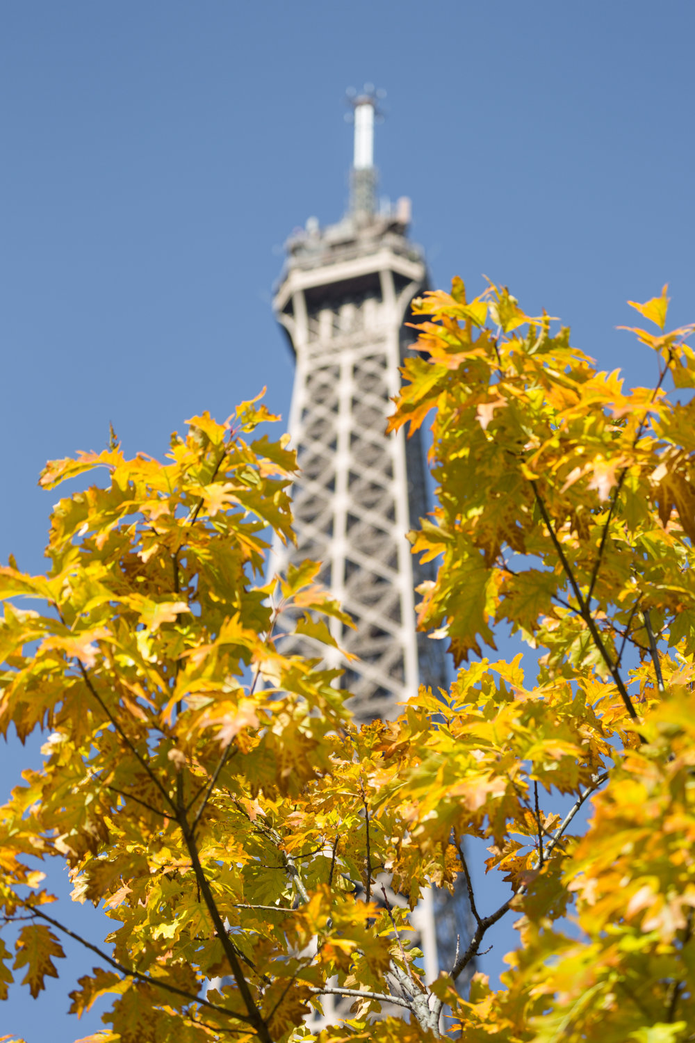 There is fall foliage to be seen in the parks and gardens which have a view of the Grande Dame de Paris, the Eiffel Tower..