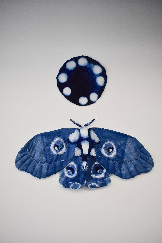 Indigo Moth