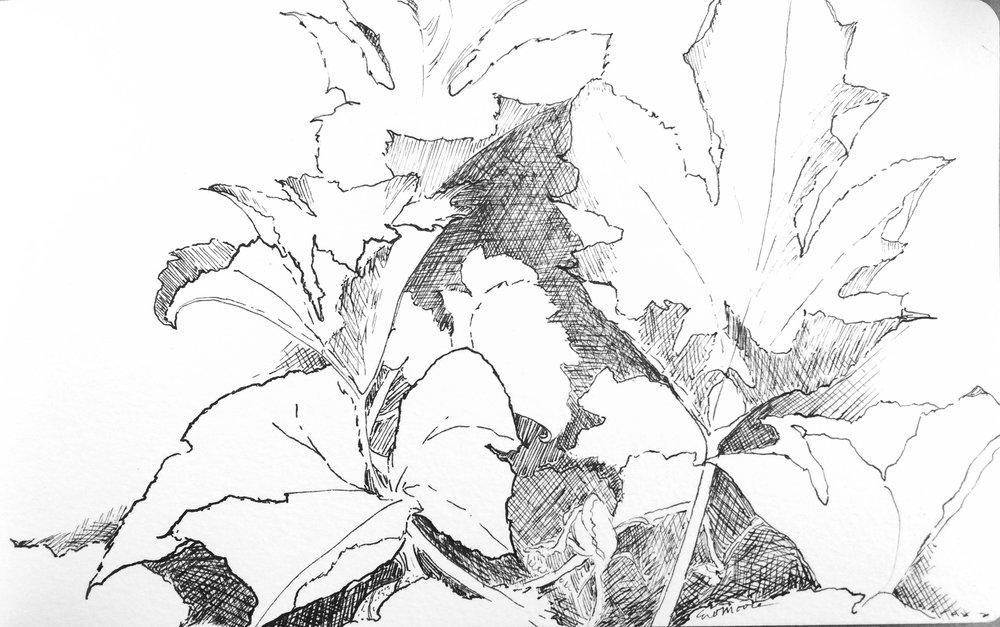 Monhegan - The Pumpkin Patch