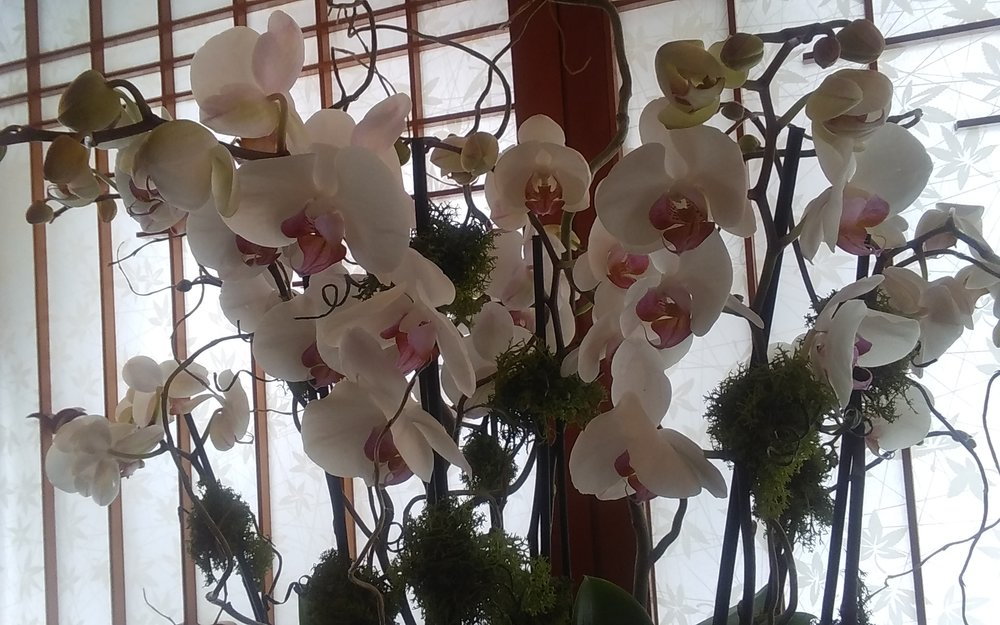 Orchids Galore