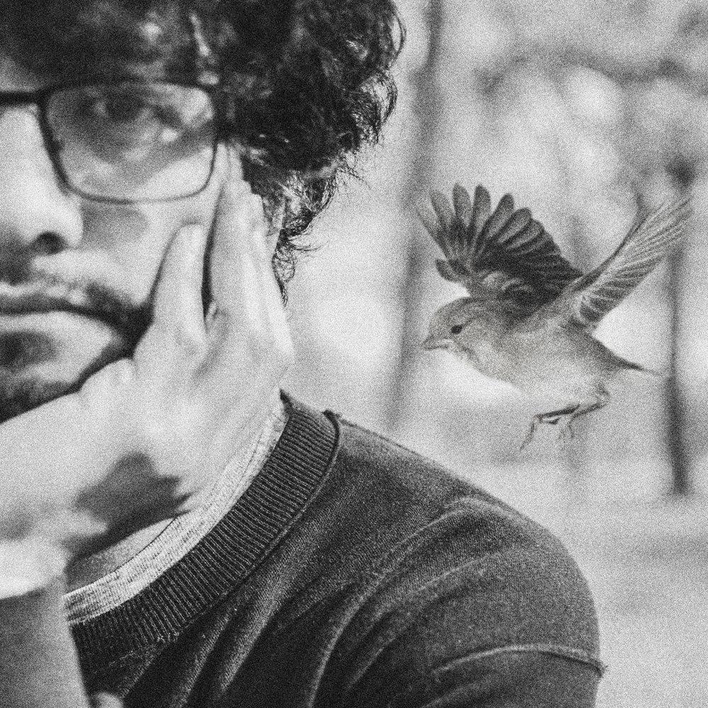 HEADSHOT_BIRD.jpg