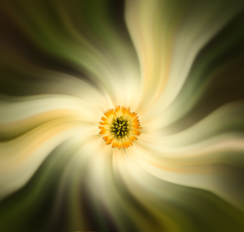 Alaska Flower Zoom and Twirl   by Jim Long awarded Medallion in Altered Reality