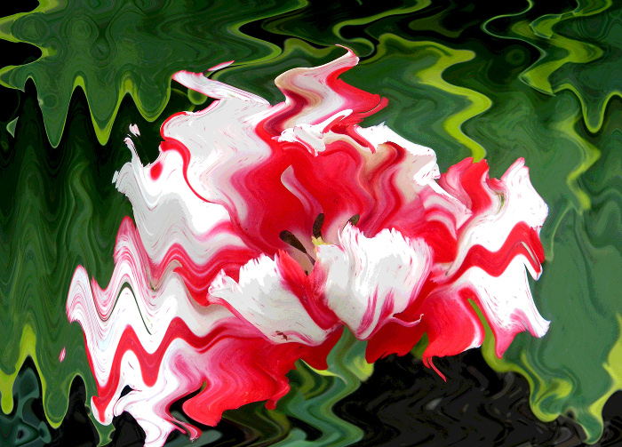Wavy Parrot Tulip wth Hosta   by Mary Cattell awarded Honors in Altered Reality