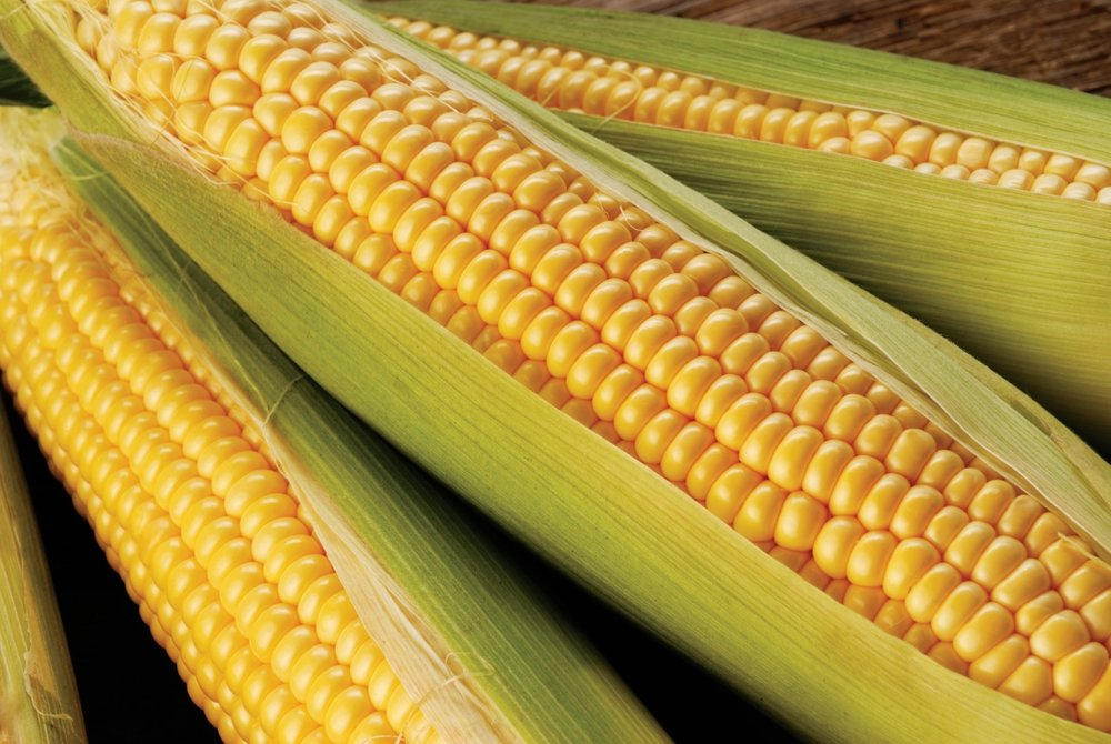 Mycotoxins-Corn (Large).jpg