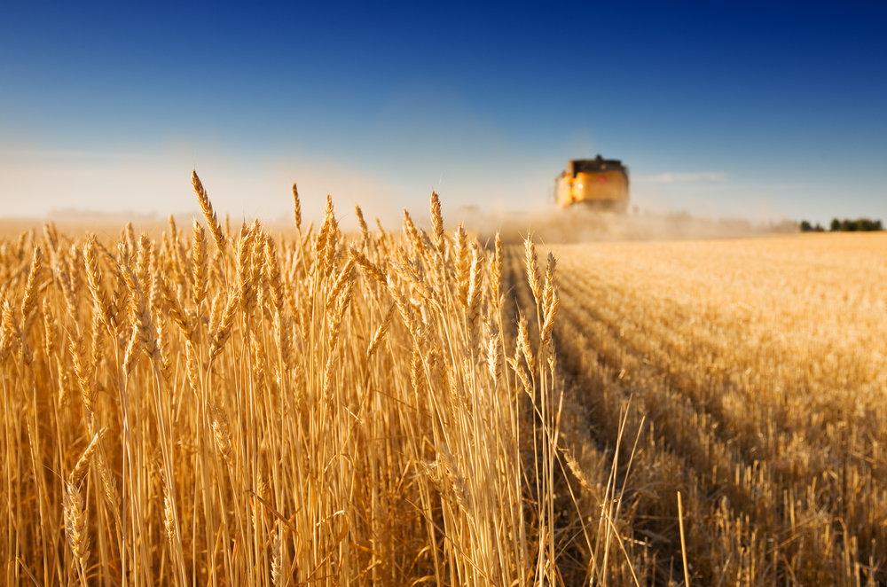 Main%20Image_Wheat%20Harvest_4000560_LARGE.jpg