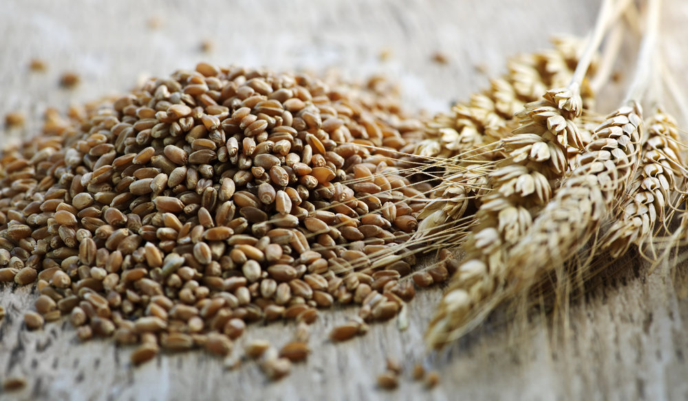 Wheat%20Picture.jpg
