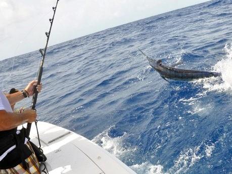 blue_marlin_fishing.jpg