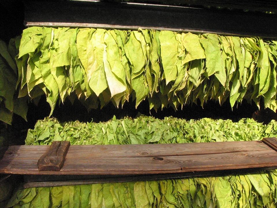 tobacco-16773_960_720.jpg
