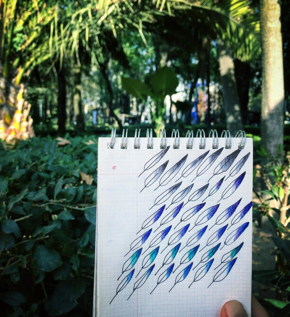 Ballpoint- and Micron-pen feather illustration, Parque México - Colonia Hipódromo / Condesa neighborhood of Ciudad de México (CDMX). January 2017.