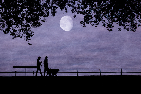 walking-the-dog-in-the-moonlight.jpg