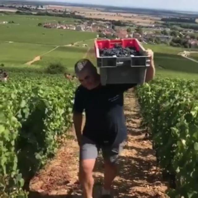 Harvest 2018 🍇 📸 : @baptistepaquotphotographie  #harvest #vendanges #wine #winelover #vosneromanee #domainefelettig #auxreignots #vosneromanee1ercru #instawine #burgundy #vines #vineyard #weloveburgundy #welovewine