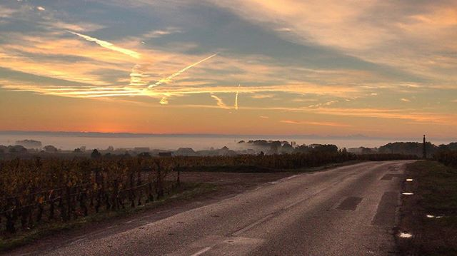 Sunrise on Chambolle🌄 #chambolle #chambollemusigny #sunrise #montblanc #automne #burgundy #felettig #domainefelettig #frenchwine #instawine #wine #vines #vineyard